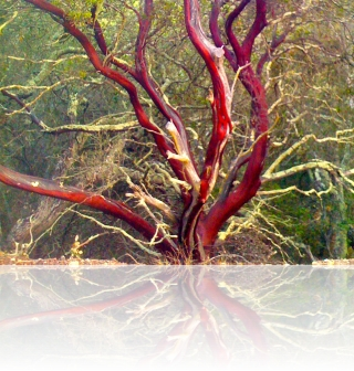 red tree | free rock mp3s and album download @ http://www.toolateforroses.com/